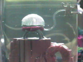 sea monkeys how to clean tank
